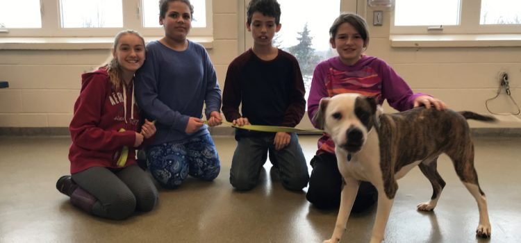 Service Learning Project at North Country Animal League – Week 4