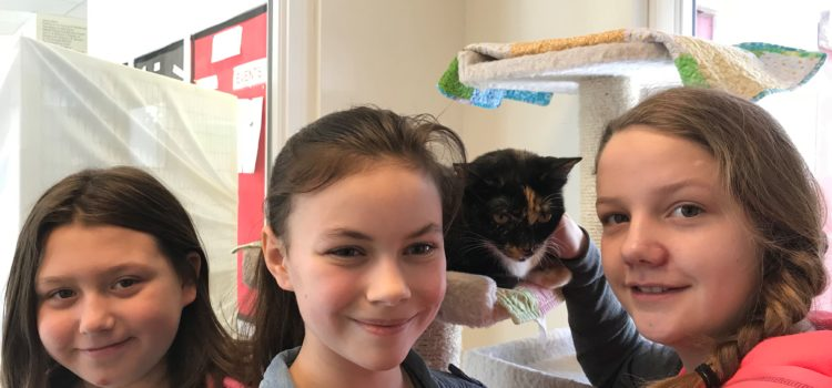 Service Learning Project at North Country Animal League – 2/16 Update